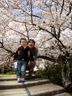 sakura_oyako.jpg